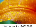Macro The Photo Of Drops Of...