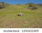 young spring bracken  pteridium ... | Shutterstock . vector #1243322305