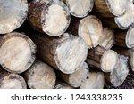 tree felling. deforestation.... | Shutterstock . vector #1243338235