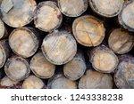 heap of felled coniferous trees ... | Shutterstock . vector #1243338238