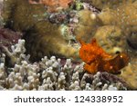 a red frog fish on hard coral... | Shutterstock . vector #124338952
