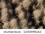 dried tall grass plants in fall | Shutterstock . vector #1243498162