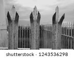 three spikes on a fence in...   Shutterstock . vector #1243536298
