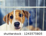 sad dog behind the fence.... | Shutterstock . vector #1243575805