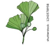 vector. engraved green ginkgo...   Shutterstock .eps vector #1243578958