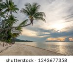 Seascape View With Tall Coconut ...