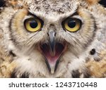 Stock photo a great horned owl bubo virginianus aka the tiger owl 1243710448