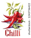 red chilli. hand drawing... | Shutterstock . vector #1243736422