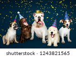 Stock photo group of puppies celebrating a new year 1243821565