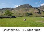 hill farming of herdwick sheep... | Shutterstock . vector #1243857085