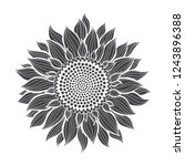 sunflower.sketch. hand draw... | Shutterstock .eps vector #1243896388