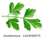 parsley isolated on white... | Shutterstock . vector #1243958575