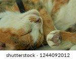 peaceful cat nap   Shutterstock . vector #1244092012