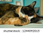 peaceful cat nap   Shutterstock . vector #1244092015