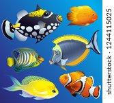 realistic exotic marine... | Shutterstock .eps vector #1244115025