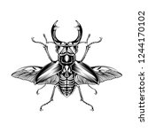 Beetle Insect Illustration