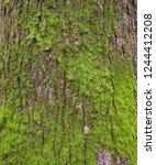 embossed texture of the brown...   Shutterstock . vector #1244412208