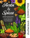 seasoning herbs and spices ... | Shutterstock .eps vector #1244417938
