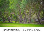 green trees in the park ...   Shutterstock . vector #1244434702