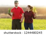 young farmers examing planted... | Shutterstock . vector #1244480245