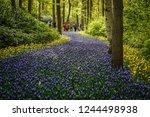 keukenhof netherlands 24 april...   Shutterstock . vector #1244498938