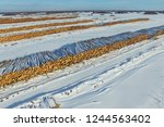 the felled trees lie under the... | Shutterstock . vector #1244563402