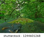 looking down a reclaimed forest ... | Shutterstock . vector #1244601268