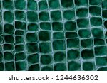 texture of bright green genuine ... | Shutterstock . vector #1244636302