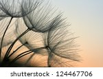 Close Up Of A Dandelion In The...