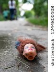 freaky  weird doll head on the... | Shutterstock . vector #1244800108