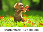 Stock photo animal baby monkey sitting on beautiful green garden and playing flower little monkey playful in 124481308