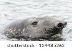Elephant Seal Head. South...