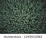 green forest. pine trees at... | Shutterstock . vector #1245012082