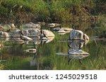 a flock of birds resting on... | Shutterstock . vector #1245029518