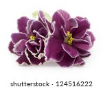 Violet  Flower Isolated On...