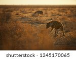close up  panoramic photo of... | Shutterstock . vector #1245170065