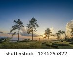 View Evening Of Pine Tree With...