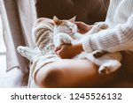 Stock photo cute cat sleeping on owners s hands one winter day girl relaxing with her pet on a sofa cosy 1245526132
