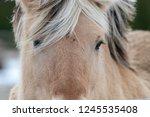 a close up of an adult horse... | Shutterstock . vector #1245535408