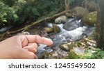butterfly resting in the hand | Shutterstock . vector #1245549502