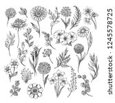 botanical hand drawn sketch.... | Shutterstock .eps vector #1245578725