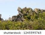 detail of a tumbled down... | Shutterstock . vector #1245595765