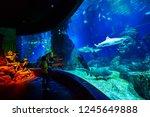 thailand  bangkok   august 30 ... | Shutterstock . vector #1245649888