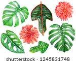 big set of tropical plants ...   Shutterstock . vector #1245831748