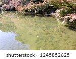 a samurai residence thas's... | Shutterstock . vector #1245852625