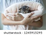 Stock photo the boy is holding a small kitten in his arms which sleeps protection animal care 1245915295