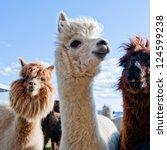 three funny alpacas | Shutterstock . vector #124599238