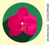 a bright pink orchid flower in... | Shutterstock .eps vector #1246109668