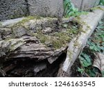 Mossy Broken Log With Green...