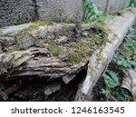 Mossy Broken Log With Green...